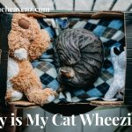 Why Is My Cat Wheezing? - Kitten Huffing Gagging Sound & Breathing Hard