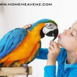 Best Air Purifier for Bird Owners in 2021 –Can You Allergic to Bird Dander