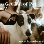How to Get Rid of Pet Dander - Remove Cat Dog Dander from House